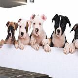 Fototapeten: Bulldogge Welpen 4