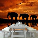 Fototapeten: Elefantes 2