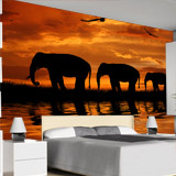 Fototapeten: Elefantes 4