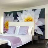 Fototapeten: Lotus-Blumen 4