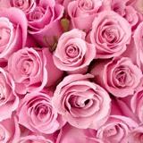 Fototapeten: Blumen 18 3