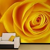 Fototapeten: Gelbe Rose 3