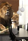 Fototapeten: Lion und Löwin 2
