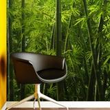 Fototapeten: Bambus 2