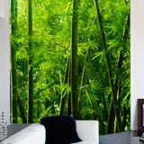 Fototapeten: Bambus 5