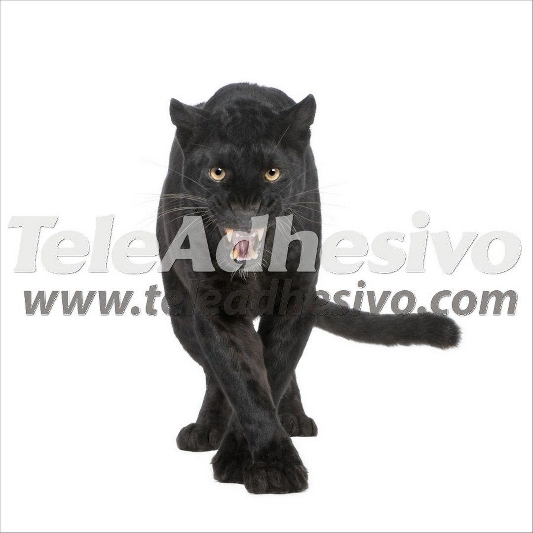 fototapete black panther. Black Bedroom Furniture Sets. Home Design Ideas
