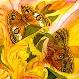 Fototapeten: Schmetterlinge Feld 2