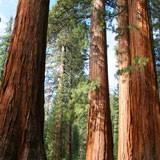 Fototapeten: Wald 3