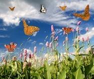 Fototapeten: Schmetterlinge 2
