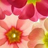 Fototapeten: Flores 21 3