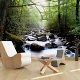 Fototapeten: Río en el bosque 2