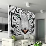 Fototapeten: White Tiger 2
