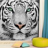 Fototapeten: White Tiger 3