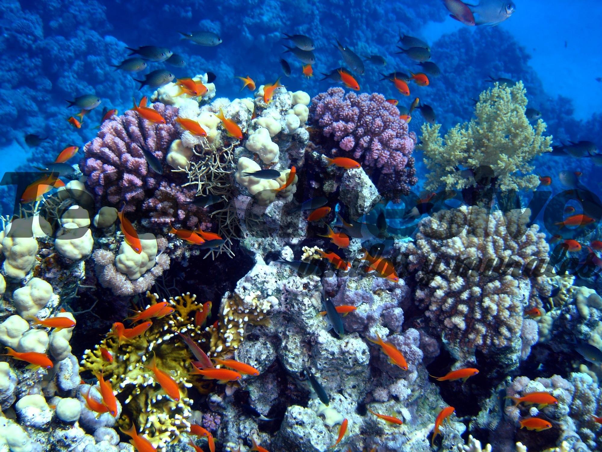 Schwimmen in den Korallen