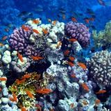 Fototapeten: Schwimmen in den Korallen 2