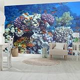 Fototapeten: Schwimmen in den Korallen 3