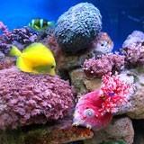 Fototapeten: Aquarium 1 3