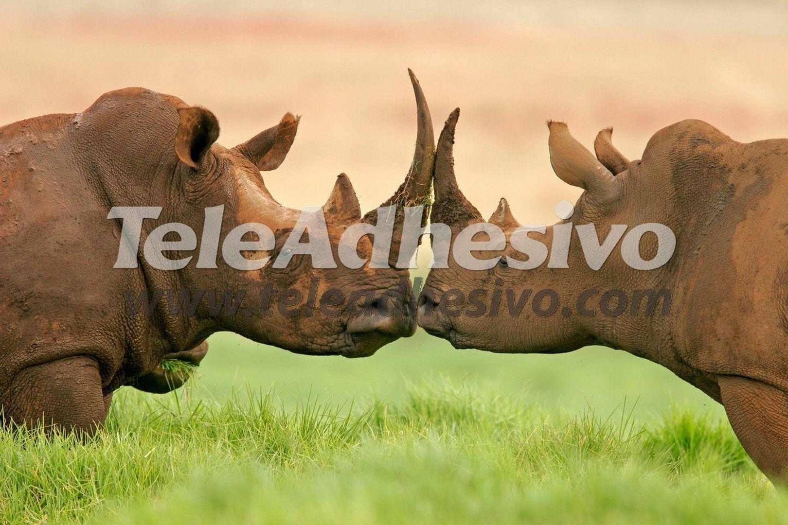 Fototapeten: Nashorn