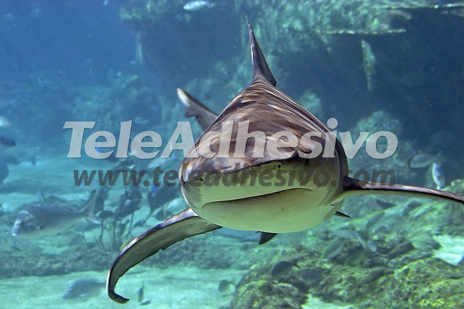Fototapeten: Hai