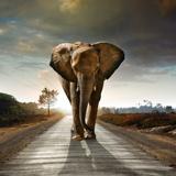 Fototapeten: Elefant 2