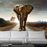 Fototapeten: Elefant 3