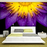 Fototapeten: purple Lotus 2