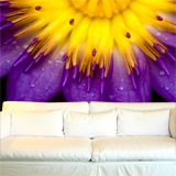 Fototapeten: purple Lotus 3