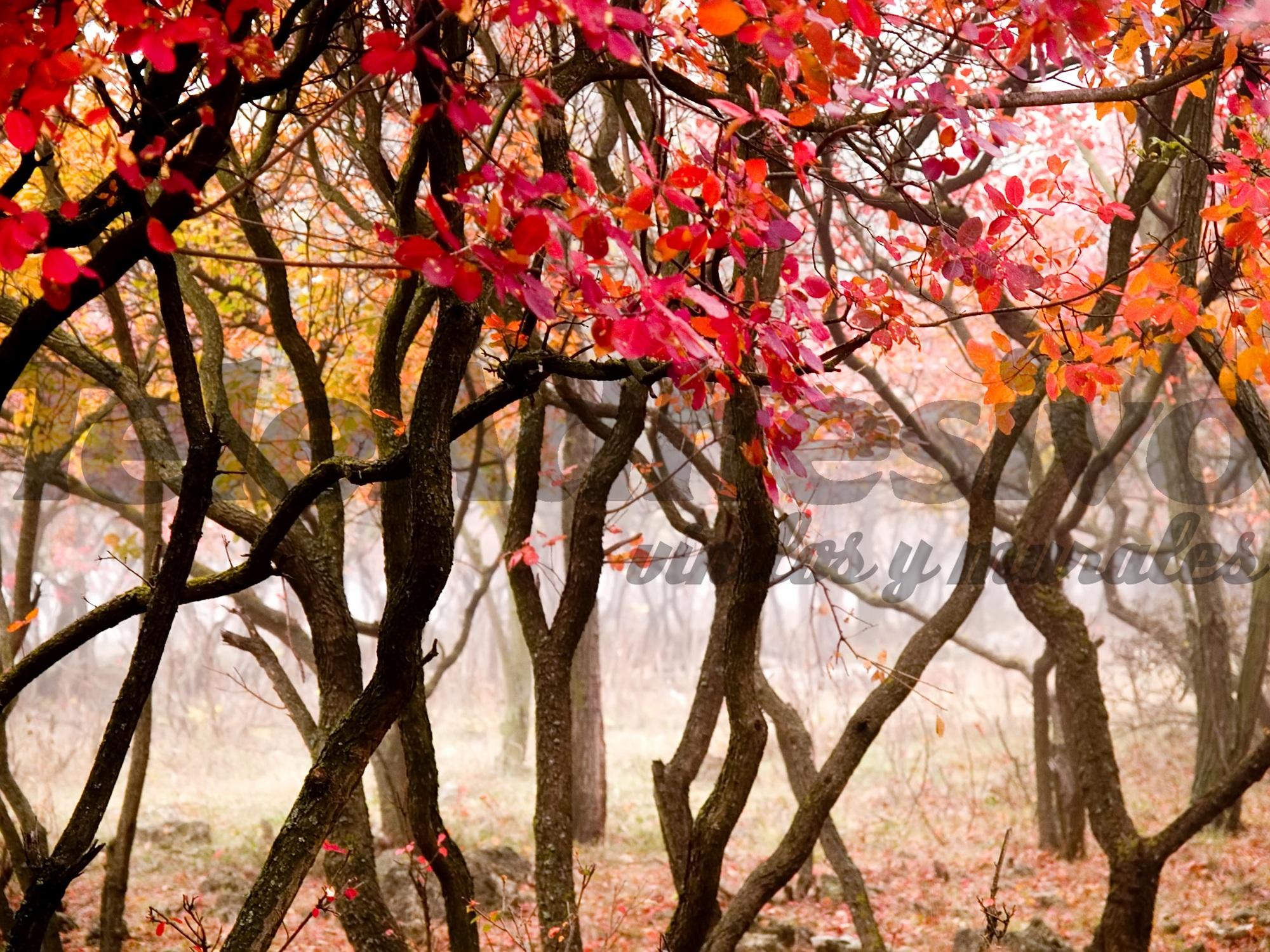 Fototapeten: Die rote Wald