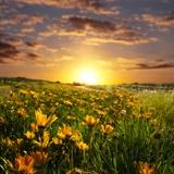 Fototapeten: Feld der Gänseblümchen 2