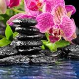 Fototapeten: Orchid und Basalt 2