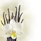 Fototapeten: White Orchid 2