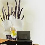 Fototapeten: White Orchid 3