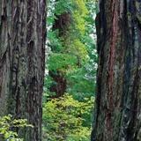 Fototapeten: Mitten im Wald 2