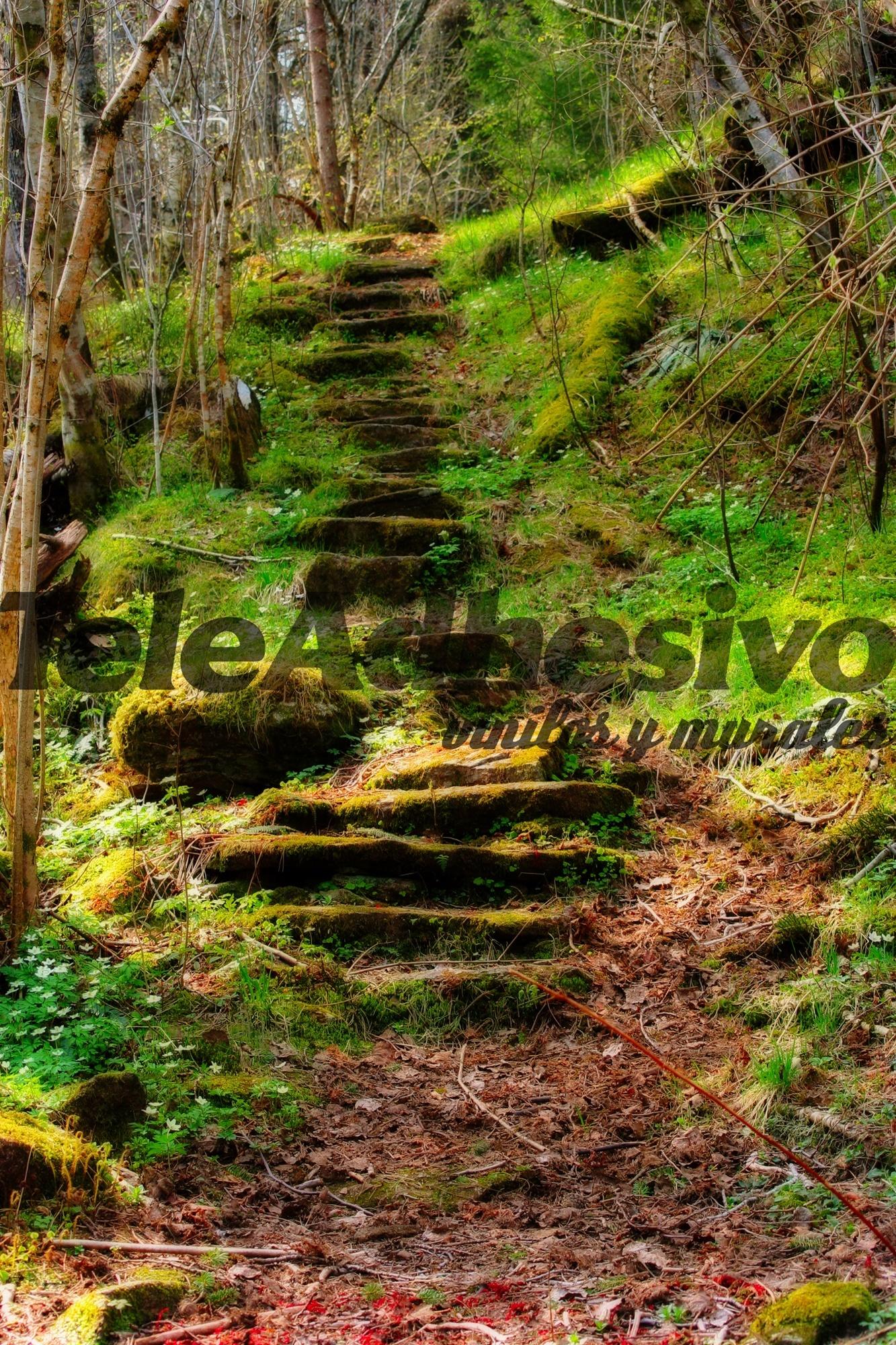 Fototapeten: Wald Treppen