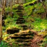 Fototapeten: Wald Treppen  2