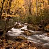 Fototapeten: Wald Fluss 1