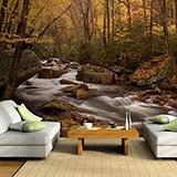 Fototapeten: Wald Fluss 2