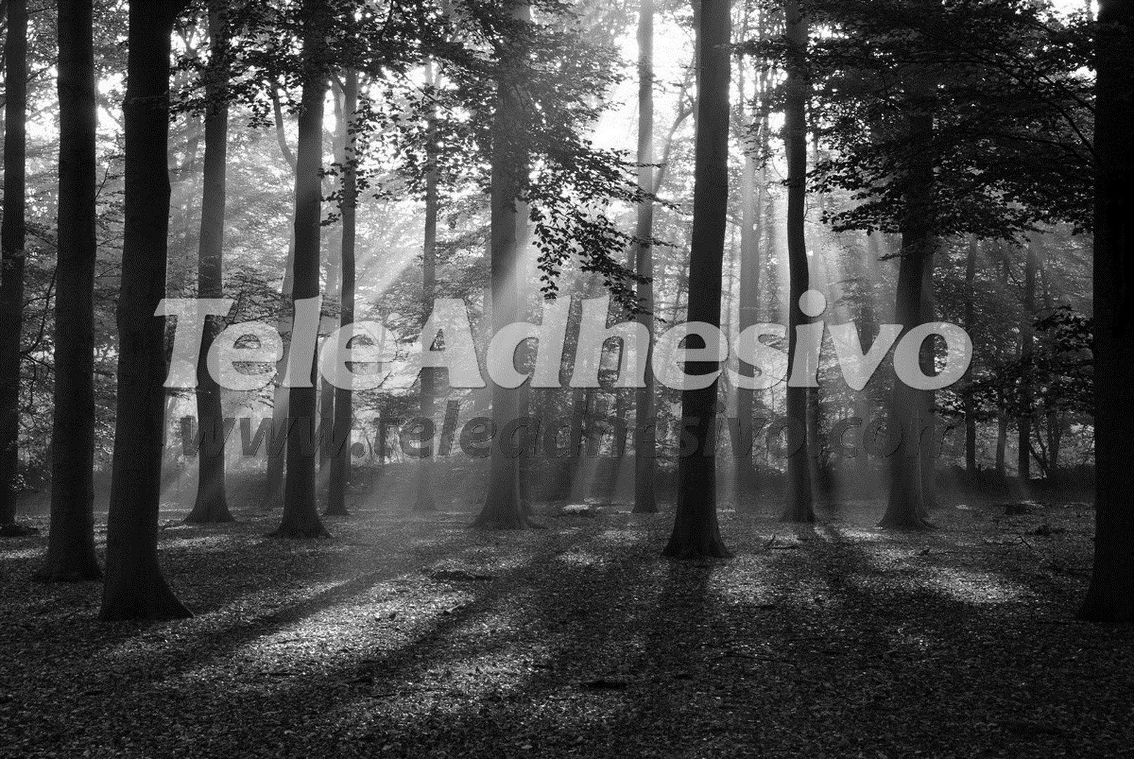 Fototapeten: Landschaft 56