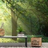 Fototapeten: Licht durch die Bäume 2