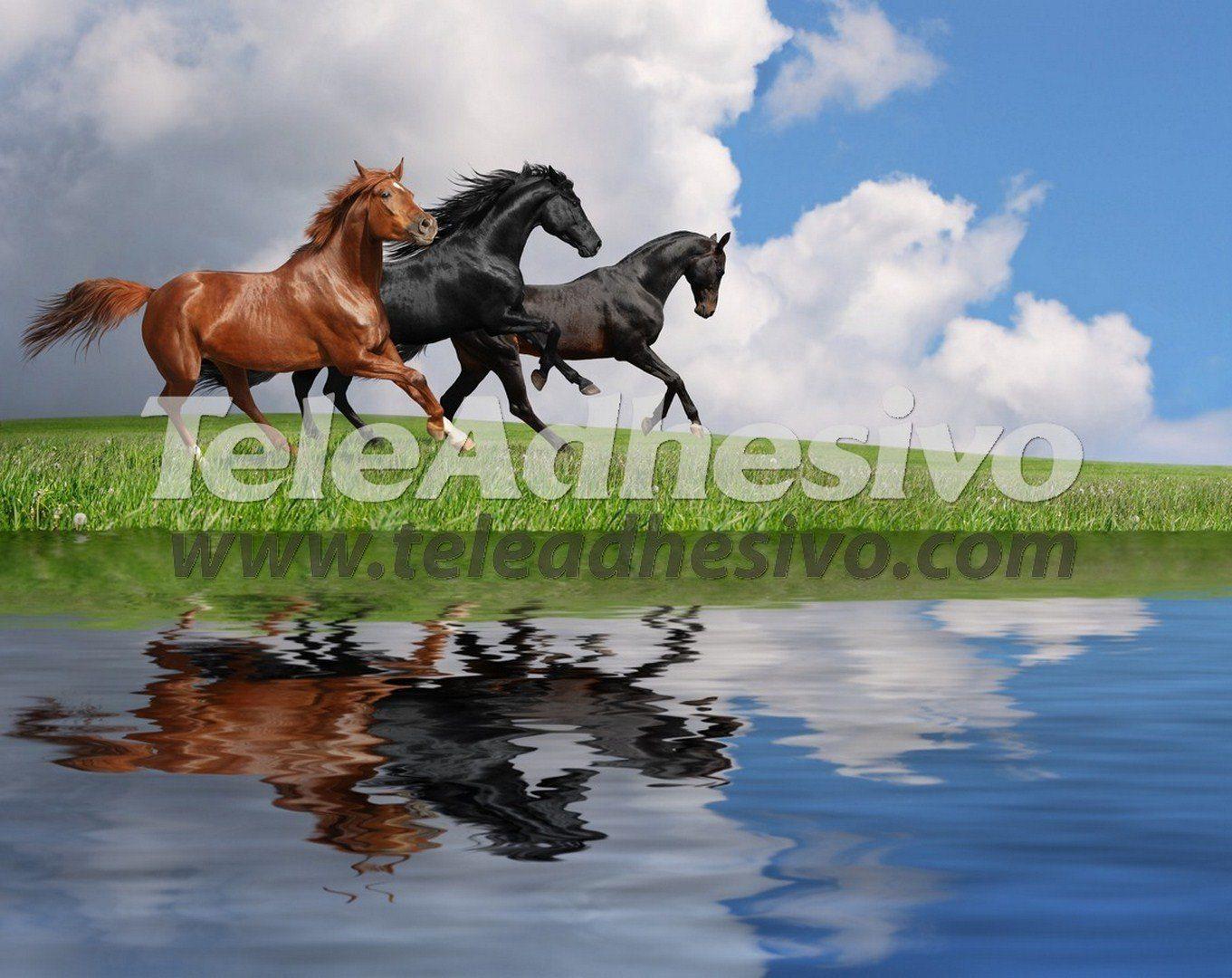 Fototapeten: Pferde und wasser