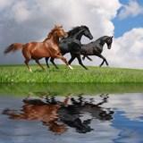 Fototapeten: Pferde und wasser 3