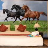 Fototapeten: Pferde und wasser 5