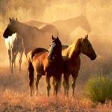Fototapeten: Herden von Pferden 3