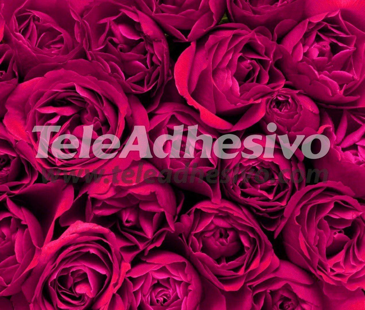 Fototapeten: Blumen 3