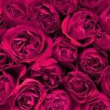 Fototapeten: Blumen 3 3