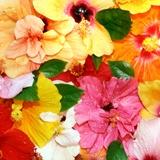 Fototapeten: Bunte Blumen 1