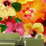 Fototapeten: Bunte Blumen 3