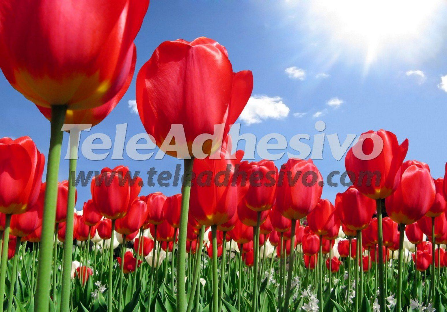 Fototapeten: Blumen 11