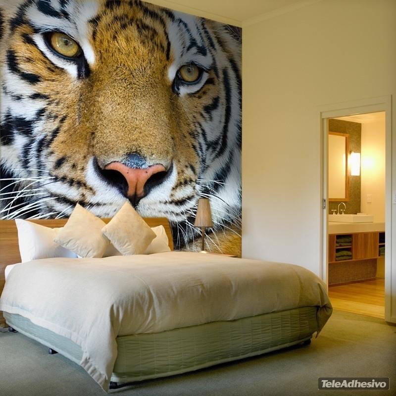 Fototapeten: Tiger