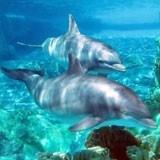 Fototapeten: Dolphins 3